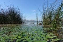 Skhoder Lake